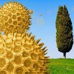 Soleil et douceur favorisent floraisons et pollens